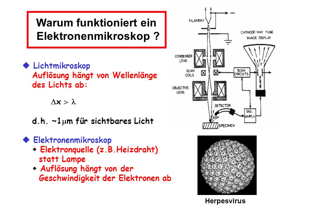 Warum funktioniert ein Elektronenmikroskop ? Lichtmikroskop Auflösung hängt von Wellenlänge des Lichts ab: x d.h. ~1 m für sichtbares Licht Elektronen