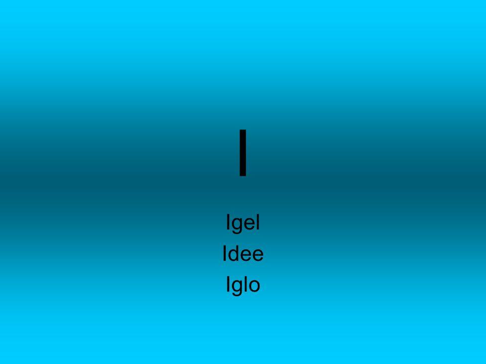 I Igel Idee Iglo