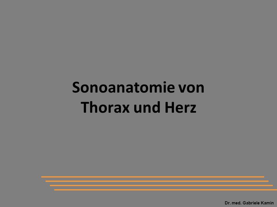 Dr. med. Gabriele Kamin Sonoanatomie von Thorax und Herz