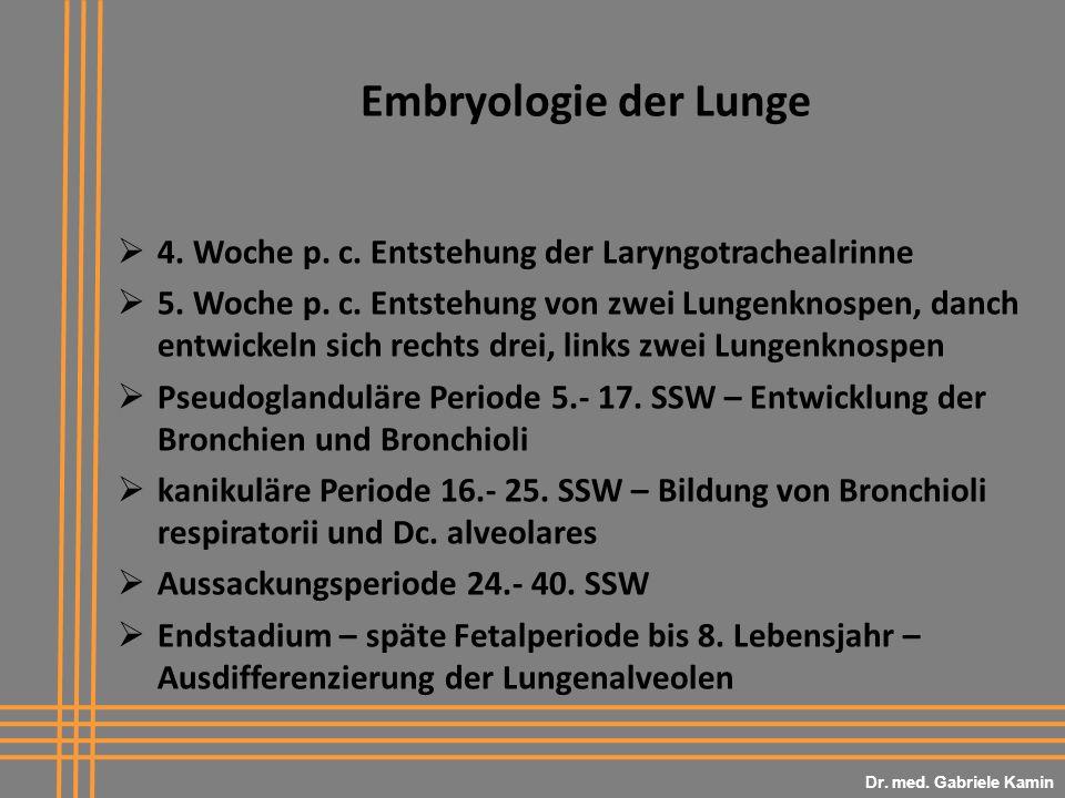 Embryologie der Lunge 4. Woche p. c. Entstehung der Laryngotrachealrinne 5. Woche p. c. Entstehung von zwei Lungenknospen, danch entwickeln sich recht