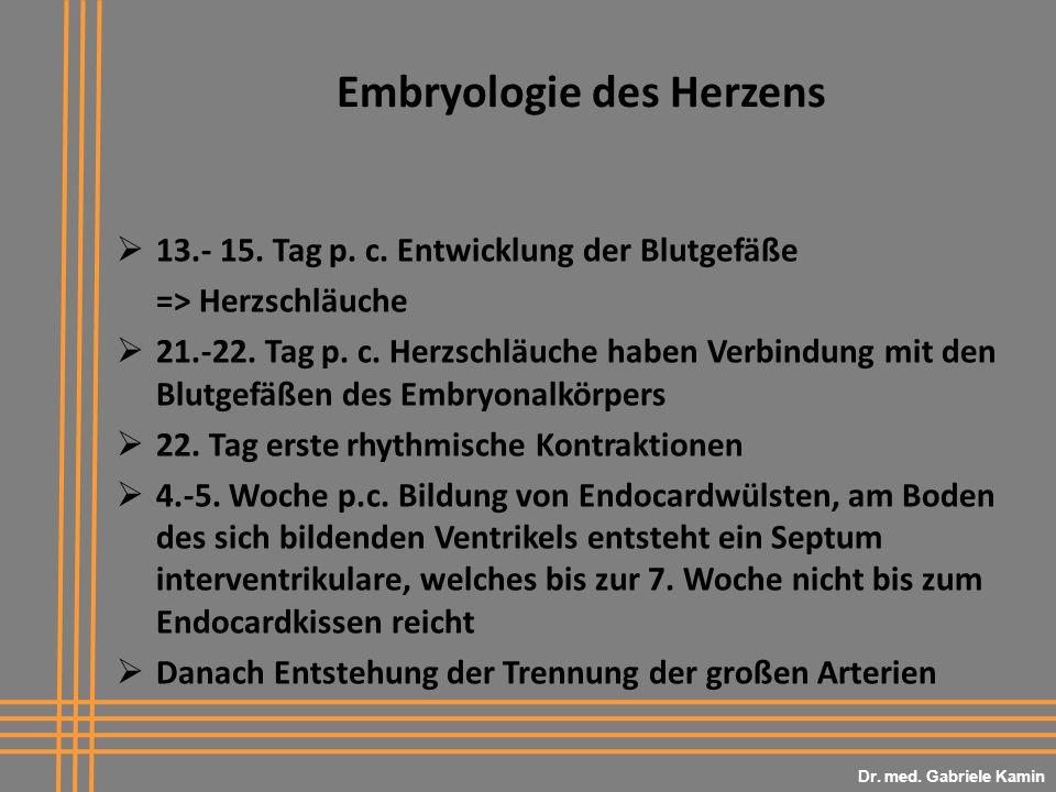 Embryologie des Herzens 13.- 15. Tag p. c. Entwicklung der Blutgefäße => Herzschläuche 21.-22. Tag p. c. Herzschläuche haben Verbindung mit den Blutge