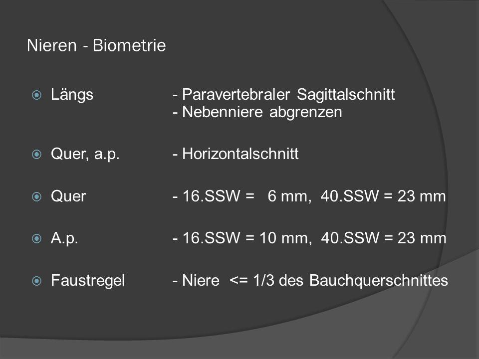 Nieren - Biometrie Längs- Paravertebraler Sagittalschnitt - Nebenniere abgrenzen Quer, a.p.- Horizontalschnitt Quer- 16.SSW = 6 mm, 40.SSW = 23 mm A.p.- 16.SSW = 10 mm, 40.SSW = 23 mm Faustregel- Niere <= 1/3 des Bauchquerschnittes
