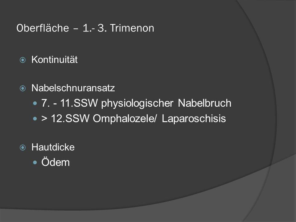 Oberfläche – 1.- 3.Trimenon Kontinuität Nabelschnuransatz 7.