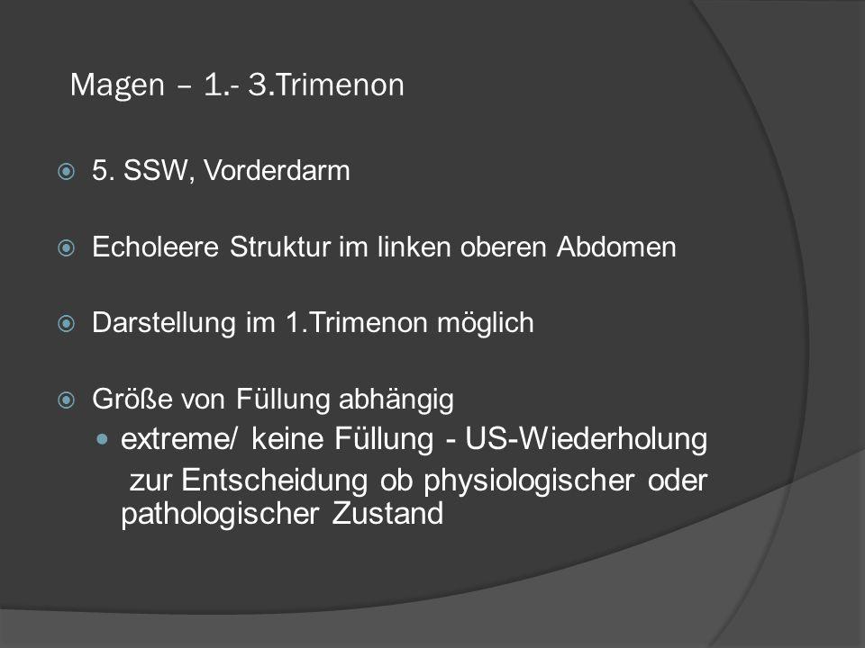 Magen – 1.- 3.Trimenon 5.