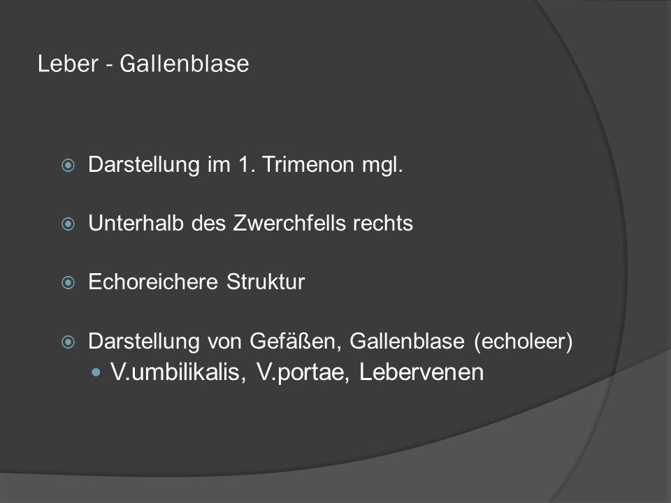 Leber - Gallenblase Darstellung im 1.Trimenon mgl.
