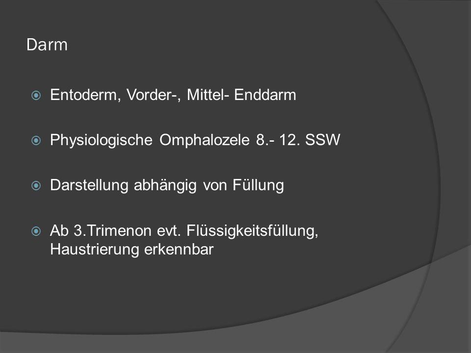 Darm Entoderm, Vorder-, Mittel- Enddarm Physiologische Omphalozele 8.- 12.