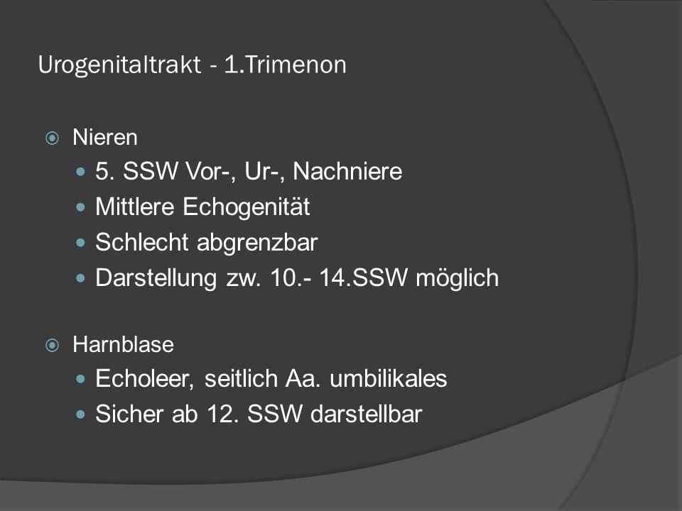 Urogenitaltrakt - 1.Trimenon Nieren 5.