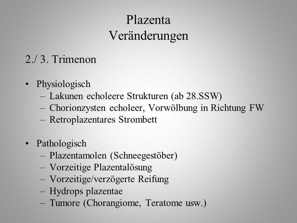Plazenta Veränderungen 2./ 3.
