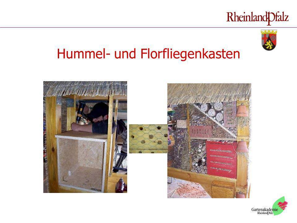 Hummel- und Florfliegenkasten