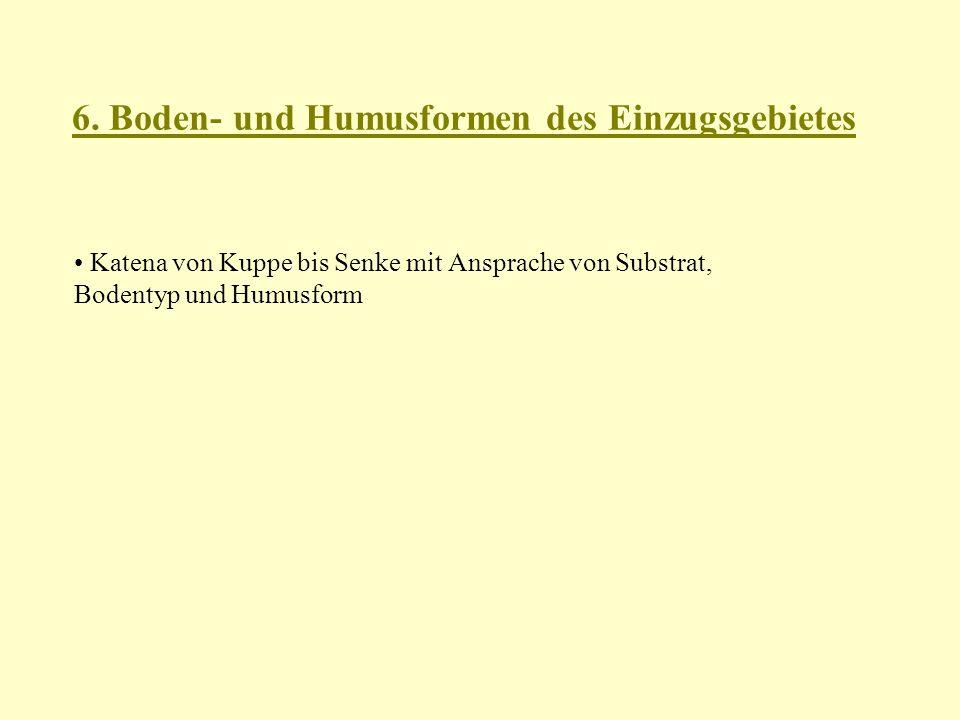 6. Boden- und Humusformen des Einzugsgebietes Katena von Kuppe bis Senke mit Ansprache von Substrat, Bodentyp und Humusform