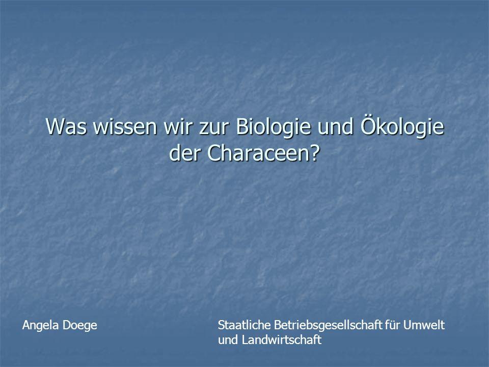 Was wissen wir zur Biologie und Ökologie der Characeen? Angela DoegeStaatliche Betriebsgesellschaft für Umwelt und Landwirtschaft