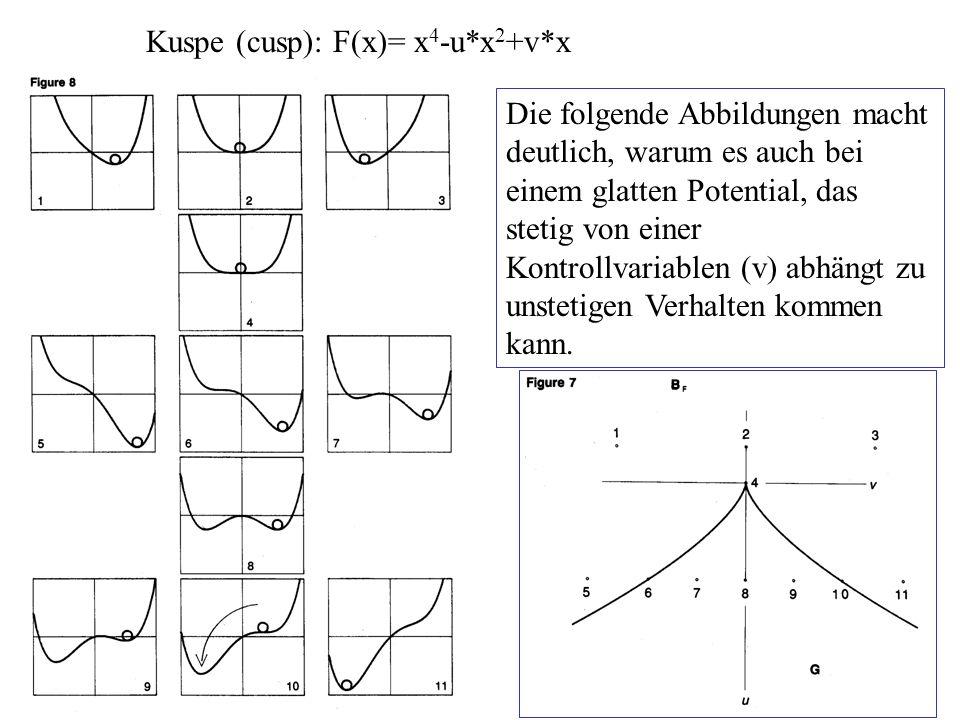 Kuspe (cusp): F(x)= x 4 -u*x 2 +v*x Die folgende Abbildungen macht deutlich, warum es auch bei einem glatten Potential, das stetig von einer Kontrollv