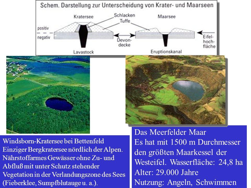 Das Meerfelder Maar Es hat mit 1500 m Durchmesser den größten Maarkessel der Westeifel. Wasserfläche: 24,8 ha Alter: 29.000 Jahre Nutzung: Angeln, Sch