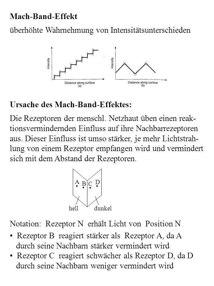 Mach-Band-Effekt überhöhte Wahrnehmung von Intensitätsunterschieden Ursache des Mach-Band-Effektes: Die Rezeptoren der menschl. Netzhaut üben einen re