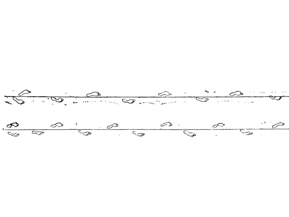 Während das linke Bein als Stütze dient, hebt sich der rechte Fuß vom Boden und beschreibt dabei eine Abrollbewegung von der Ferse zu den Zehenspitzen, welche den Boden als letzte verlassen; das ganze Bein wird nun nach vorne geführt, und der Fuß erreicht mit der Ferse zuerst den Boden.