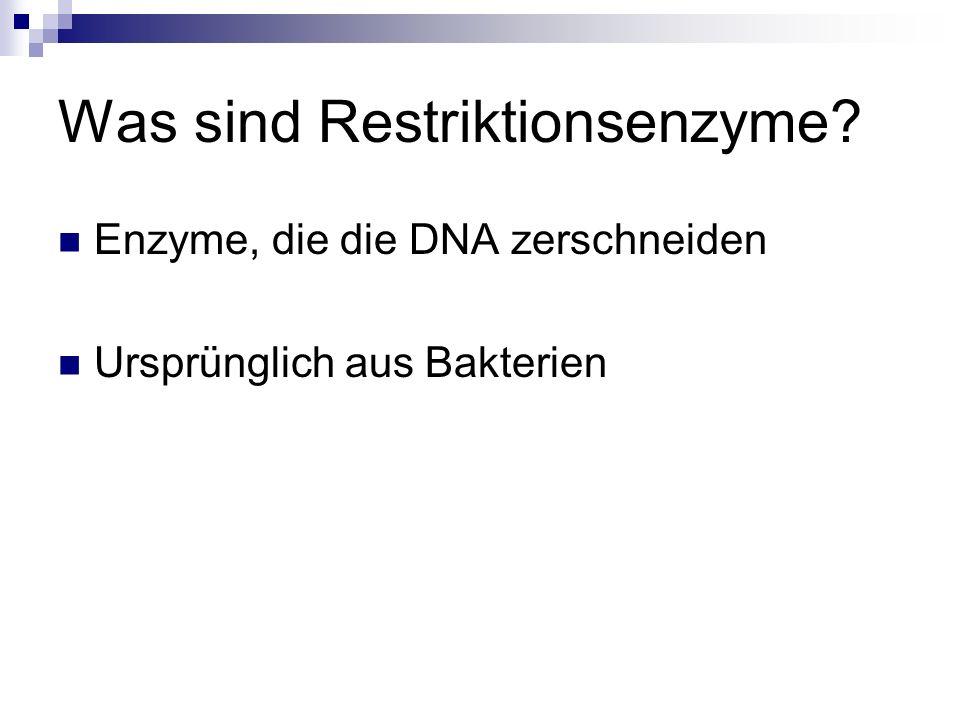 Was sind Restriktionsenzyme? Enzyme, die die DNA zerschneiden Ursprünglich aus Bakterien