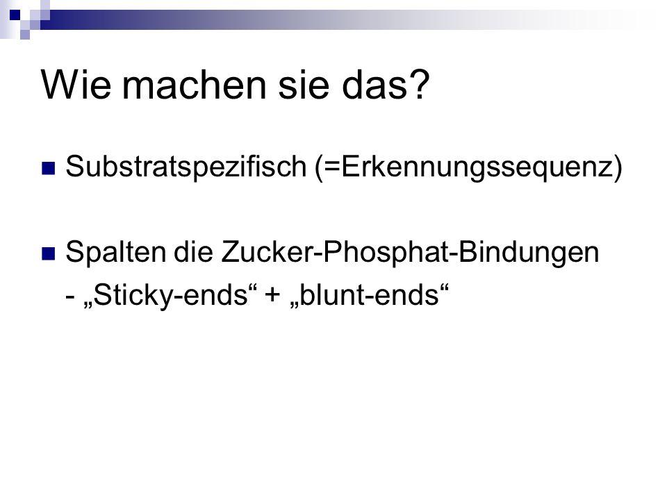 Wie machen sie das? Substratspezifisch (=Erkennungssequenz) Spalten die Zucker-Phosphat-Bindungen - Sticky-ends + blunt-ends