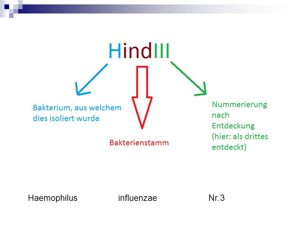 HaemophilusinfluenzaeNr.3