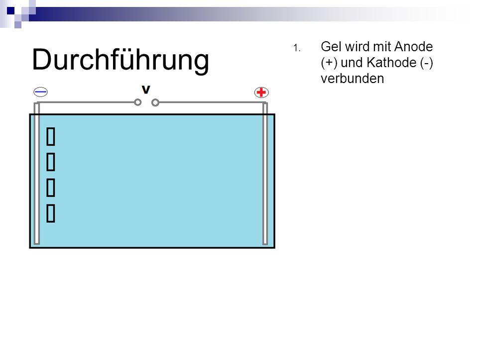 Durchführung 1. Gel wird mit Anode (+) und Kathode (-) verbunden