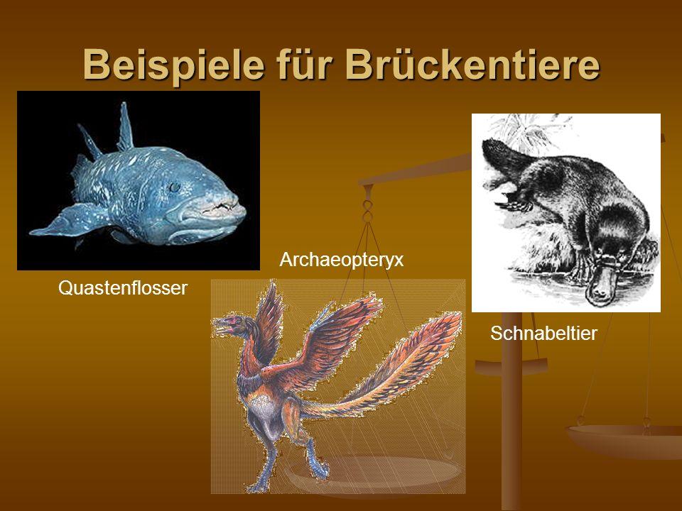 Beispiele für Brückentiere Quastenflosser Archaeopteryx Schnabeltier