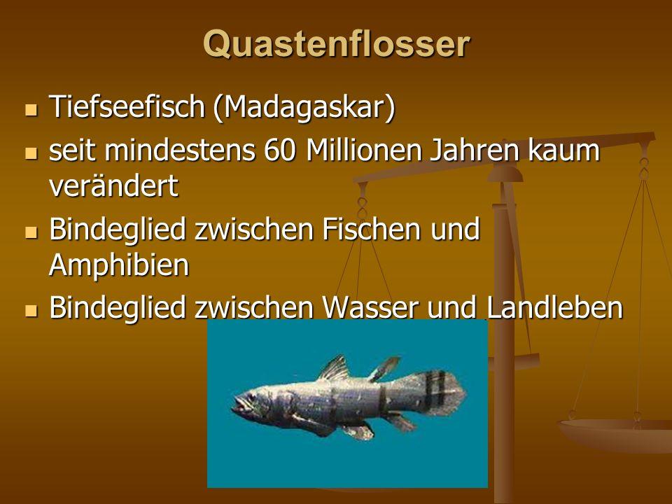 Quastenflosser Tiefseefisch (Madagaskar) Tiefseefisch (Madagaskar) seit mindestens 60 Millionen Jahren kaum verändert seit mindestens 60 Millionen Jah