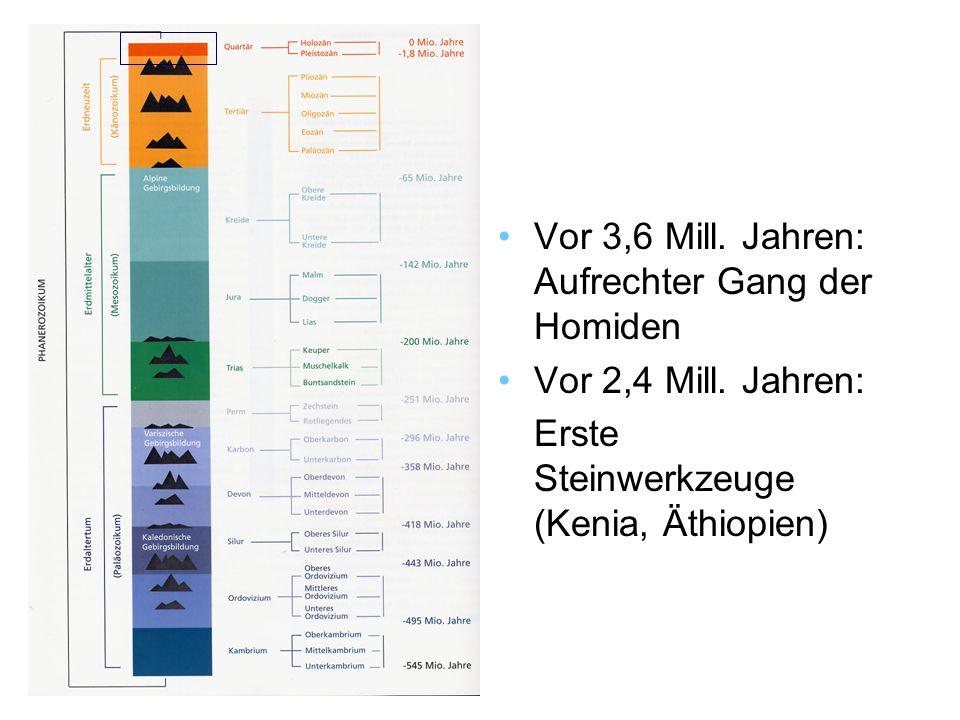 Vor 3,6 Mill.Jahren: Aufrechter Gang der Homiden Vor 2,4 Mill.
