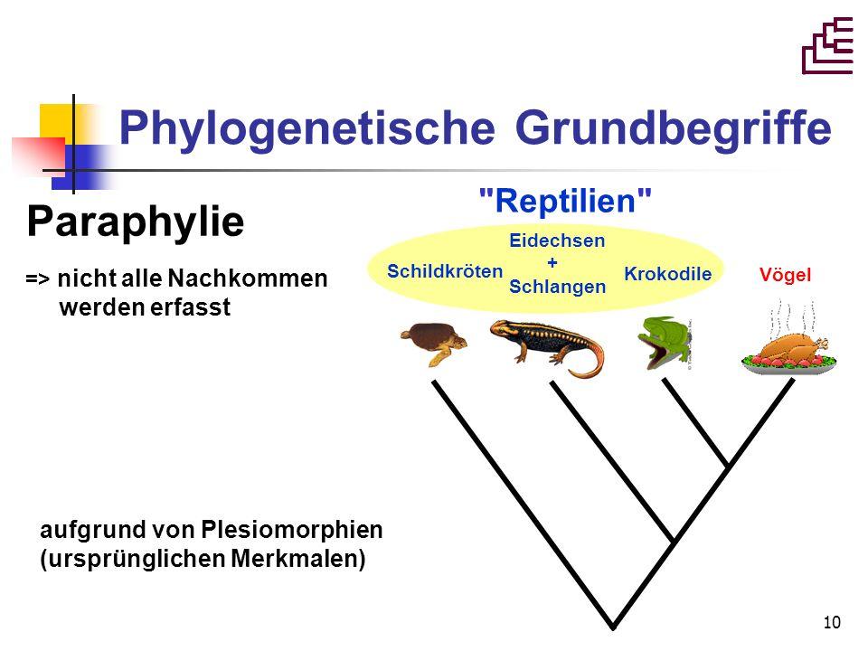 10 Paraphylie => nicht alle Nachkommen werden erfasst Vögel aufgrund von Plesiomorphien (ursprünglichen Merkmalen) Phylogenetische Grundbegriffe