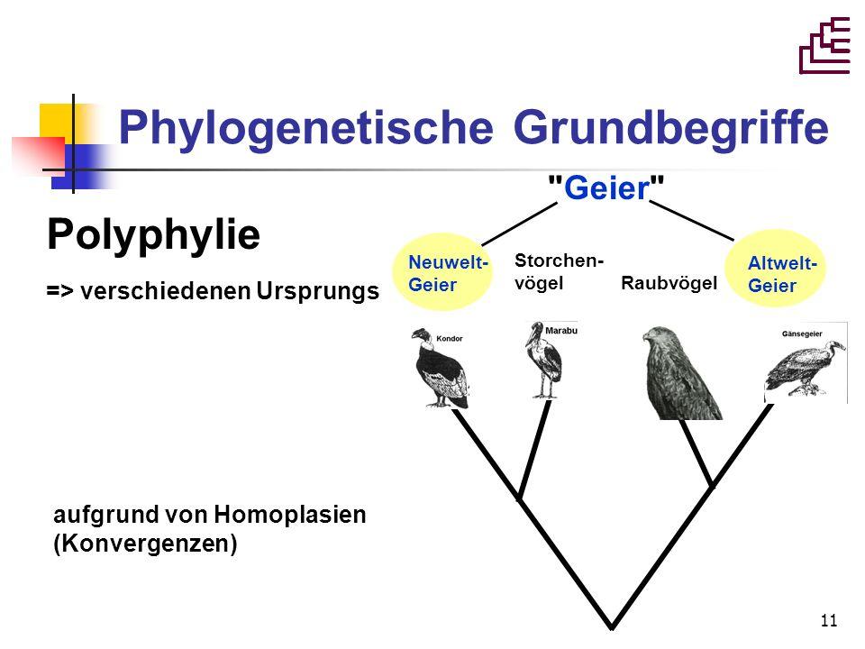 11 Geier Neuwelt- Geier Storchen- vögel Raubvögel Altwelt- Geier Polyphylie => verschiedenen Ursprungs aufgrund von Homoplasien (Konvergenzen) Phylogenetische Grundbegriffe
