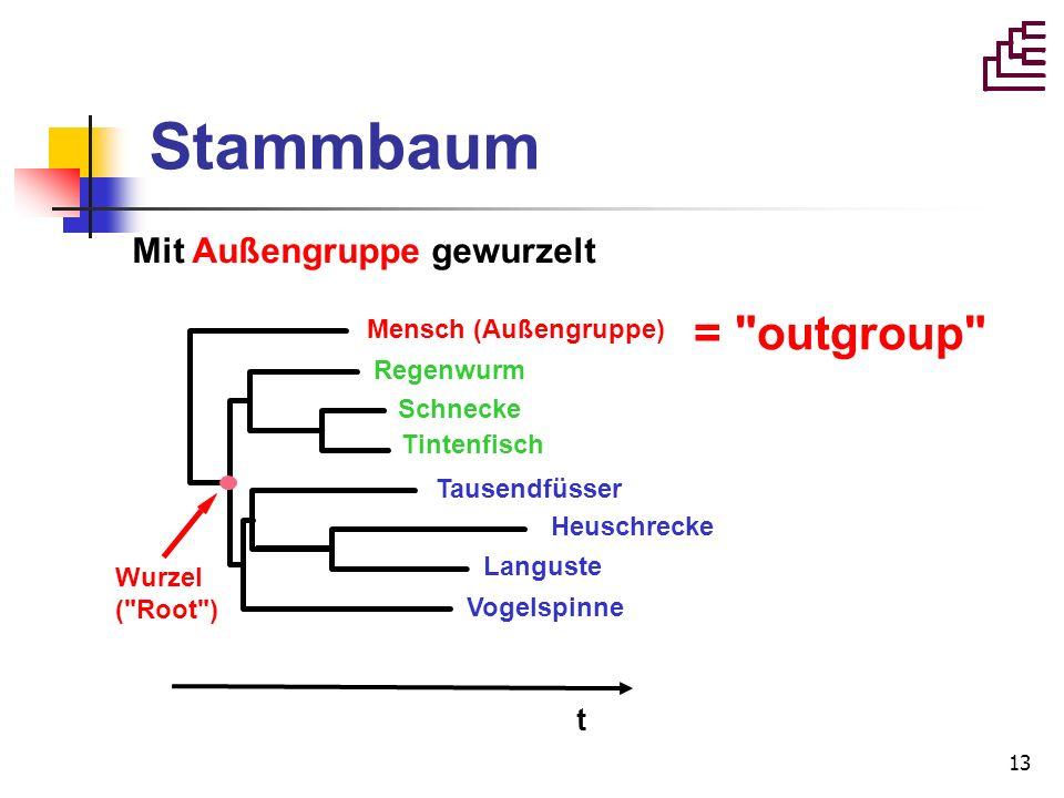 13 Stammbaum Regenwurm Tintenfisch Schnecke Tausendfüsser Vogelspinne Languste Heuschrecke Mensch (Außengruppe) Wurzel (