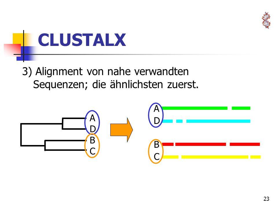 23 ADBCADBC CLUSTALX 3) Alignment von nahe verwandten Sequenzen; die ähnlichsten zuerst. BCBC ADAD