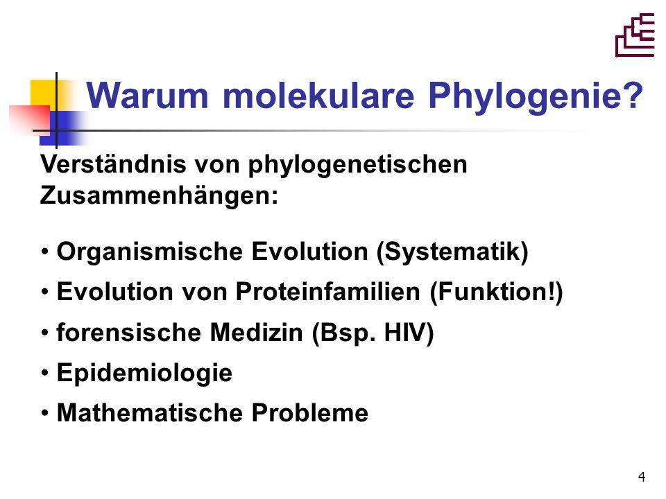 4 Warum molekulare Phylogenie? Verständnis von phylogenetischen Zusammenhängen: Organismische Evolution (Systematik) Evolution von Proteinfamilien (Fu