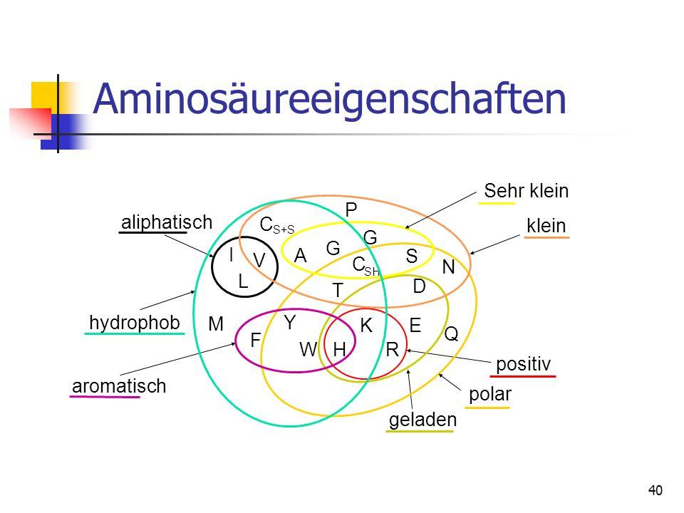 40 Aminosäureeigenschaften C P G G A V I L M F Y WH K R E Q D N S T C SH S+S positiv geladen polar aliphatisch aromatisch klein Sehr klein hydrophob