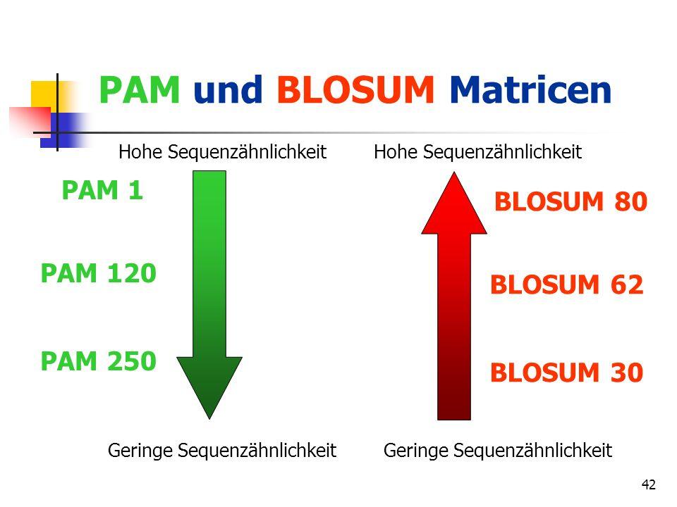 42 PAM und BLOSUM Matricen Hohe Sequenzähnlichkeit Geringe Sequenzähnlichkeit PAM 1 PAM 120 PAM 250 Hohe Sequenzähnlichkeit Geringe Sequenzähnlichkeit