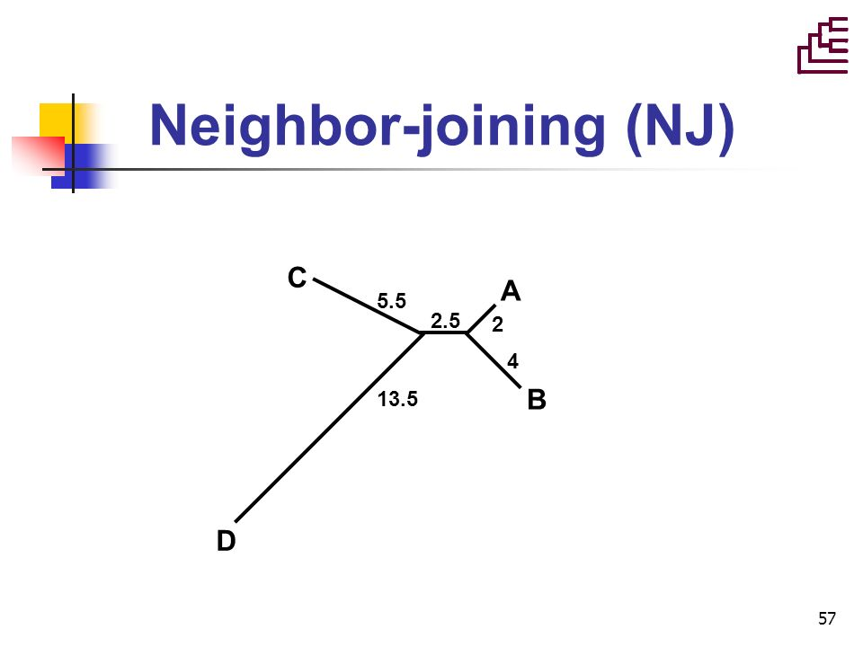 57 Neighbor-joining (NJ) A B 2 4 C 5.5 2.5 13.5 D