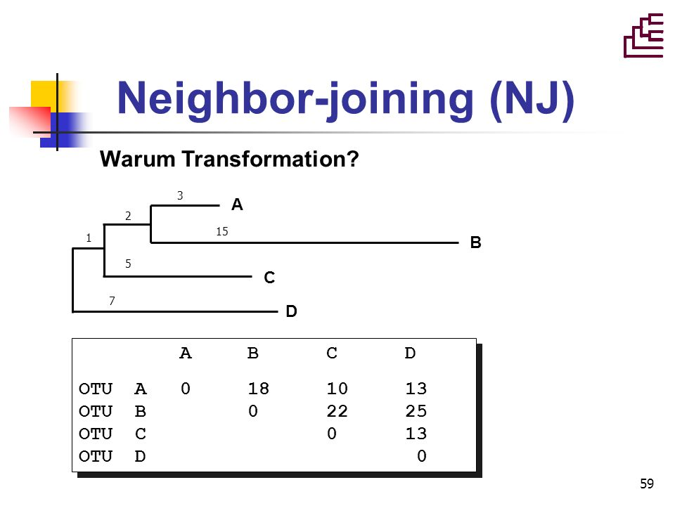 59 Neighbor-joining (NJ) Warum Transformation? A B C D OTU A 0 18 10 13 OTU B 0 22 25 OTU C 0 13 OTU D 0 A B C D OTU A 0 18 10 13 OTU B 0 22 25 OTU C