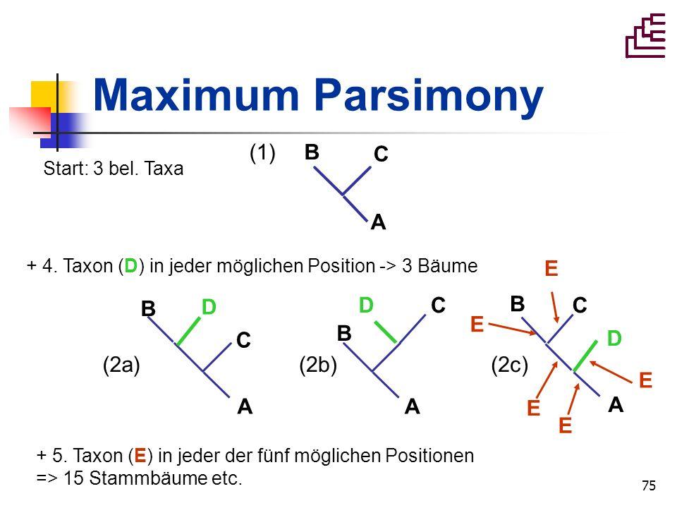 75 Maximum Parsimony A B C (1) Start: 3 bel. Taxa (2a) A B D C A B D C A B C D (2b)(2c) + 4. Taxon (D) in jeder möglichen Position -> 3 Bäume + 5. Tax