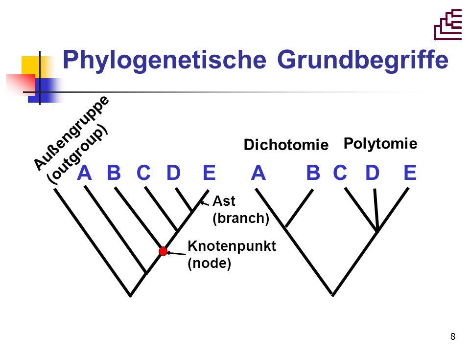 8 Phylogenetische Grundbegriffe A B C D E Dichotomie Polytomie Ast (branch) Knotenpunkt (node) Außengruppe (outgroup)