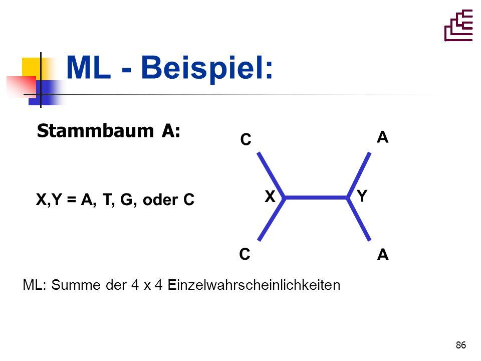 86 ML - Beispiel: C C A A Stammbaum A: X Y X,Y = A, T, G, oder C ML: Summe der 4 x 4 Einzelwahrscheinlichkeiten