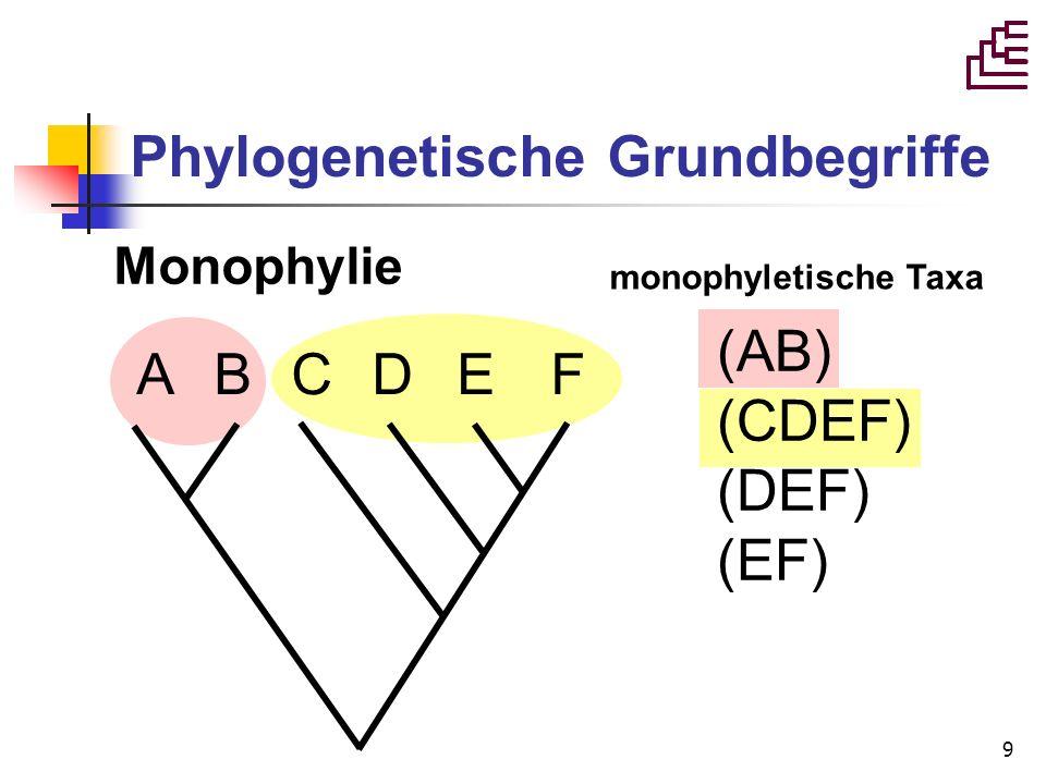 9 Phylogenetische Grundbegriffe Monophylie A B C D E F (AB) (CDEF) (DEF) (EF) monophyletische Taxa