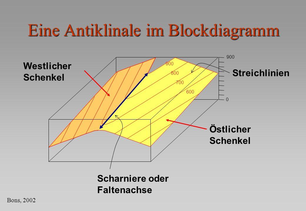 Eine Antiklinale im Blockdiagramm 900 0 Westlicher Schenkel Östlicher Schenkel Scharniere oder Faltenachse 900 800 700 600 Streichlinien Bons, 2002