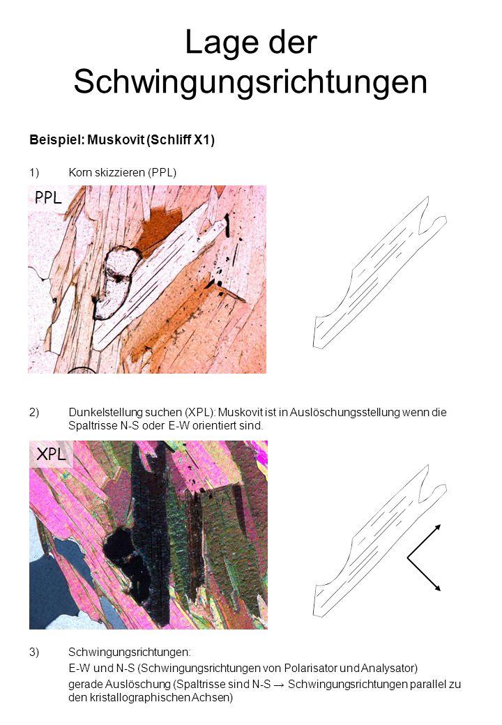 Lage der Schwingungsrichtungen 2)Dunkelstellung suchen (XPL): Muskovit ist in Auslöschungsstellung wenn die Spaltrisse N-S oder E-W orientiert sind.