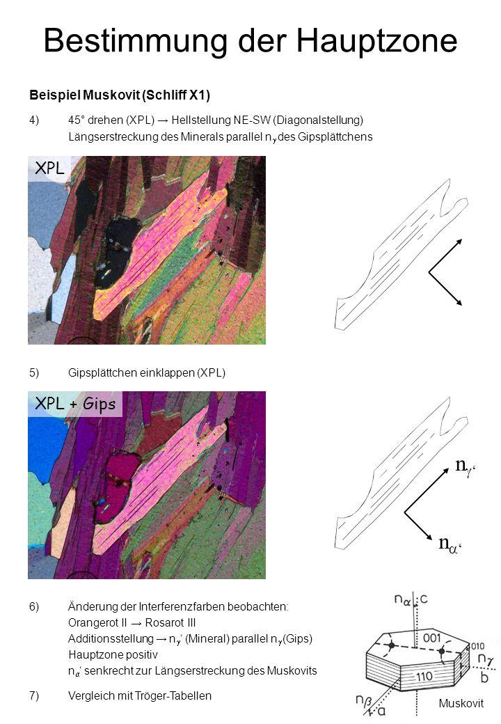 Bestimmung der Hauptzone XPL Beispiel Muskovit (Schliff X1) 4)45° drehen (XPL) Hellstellung NE-SW (Diagonalstellung) Längserstreckung des Minerals parallel n des Gipsplättchens XPL + Gips 5)Gipsplättchen einklappen (XPL) 6)Änderung der Interferenzfarben beobachten: Orangerot II Rosarot III Additionsstellung n (Mineral) parallel n (Gips) Hauptzone positiv n senkrecht zur Längserstreckung des Muskovits n n 7)Vergleich mit Tröger-Tabellen Muskovit