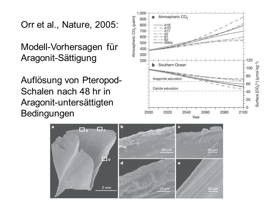 Orr et al., Nature, 2005: Modell-Vorhersagen für Aragonit-Sättigung Auflösung von Pteropod- Schalen nach 48 hr in Aragonit-untersättigten Bedingungen