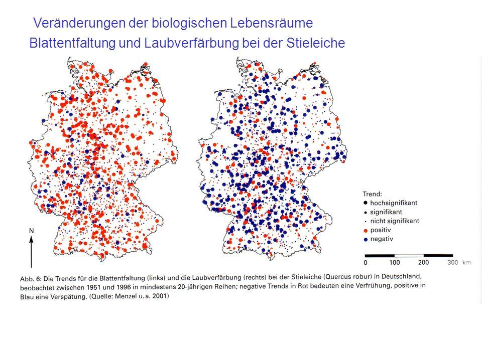Blattentfaltung und Laubverfärbung bei der Stieleiche Veränderungen der biologischen Lebensräume