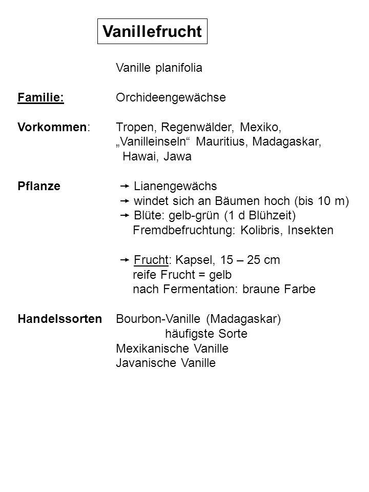 Vanillefrucht Geschichte Kultur der Azteken bis 19.