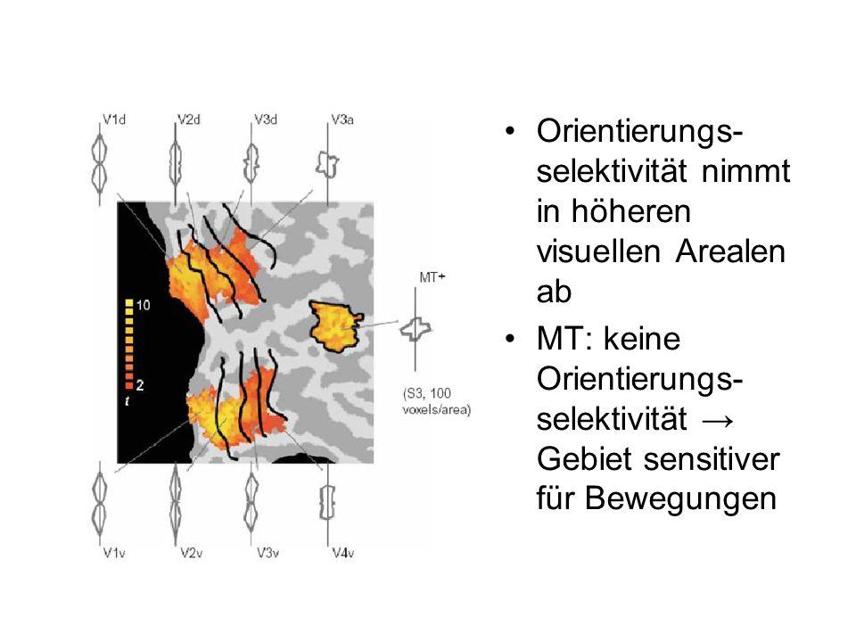 Orientierungs- selektivität nimmt in höheren visuellen Arealen ab MT: keine Orientierungs- selektivität Gebiet sensitiver für Bewegungen