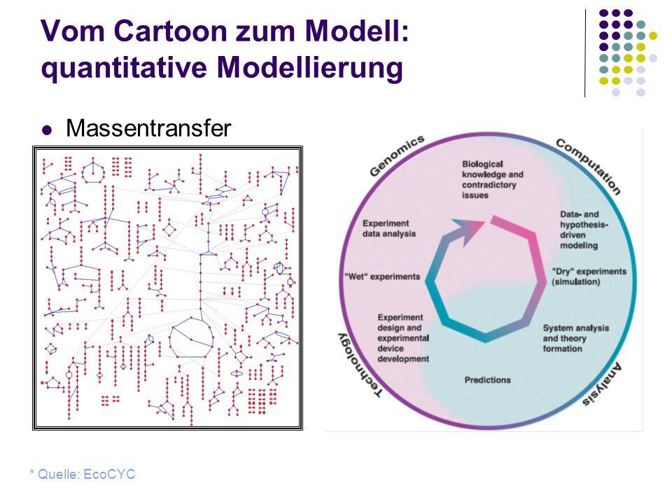 Vom Cartoon zum Modell: quantitative Modellierung Massentransfer * Quelle: EcoCYC Metabolite Enzyme +Regulation