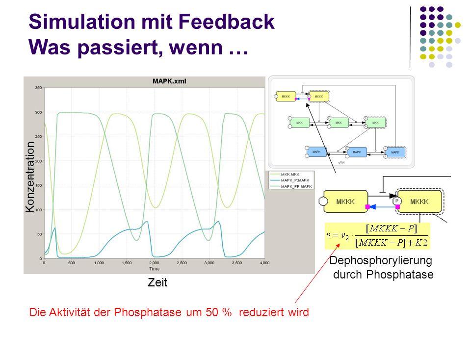 Simulation mit Feedback Was passiert, wenn … Zeit Konzentration Dephosphorylierung durch Phosphatase Die Aktivität der Phosphatase um 50 % reduziert w