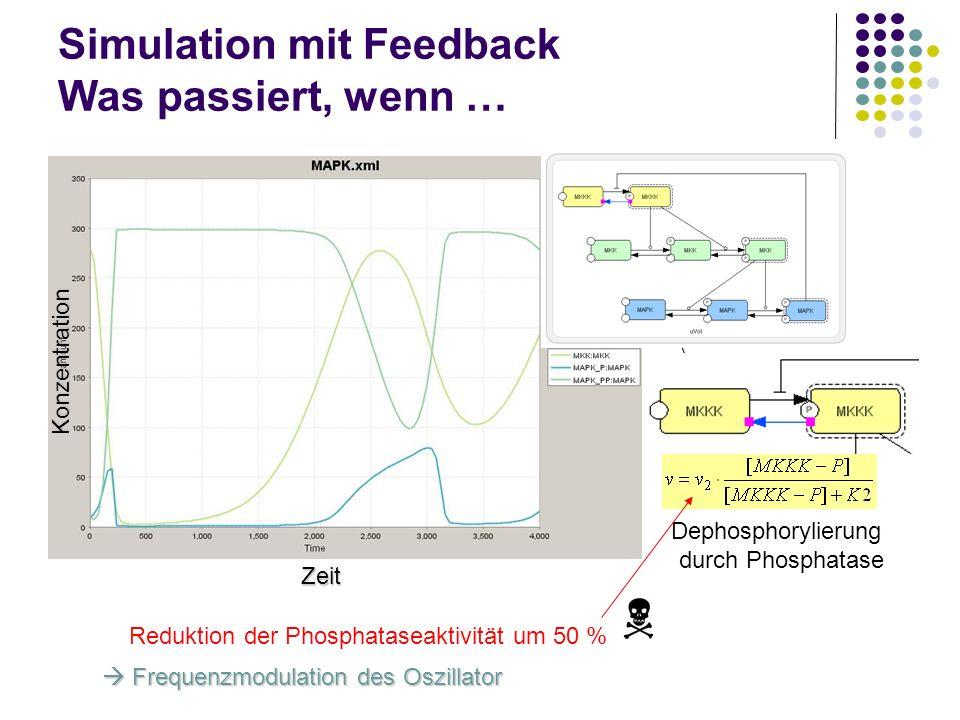 Simulation mit Feedback Was passiert, wenn … Zeit Konzentration Dephosphorylierung durch Phosphatase Reduktion der Phosphataseaktivität um 50 % Freque