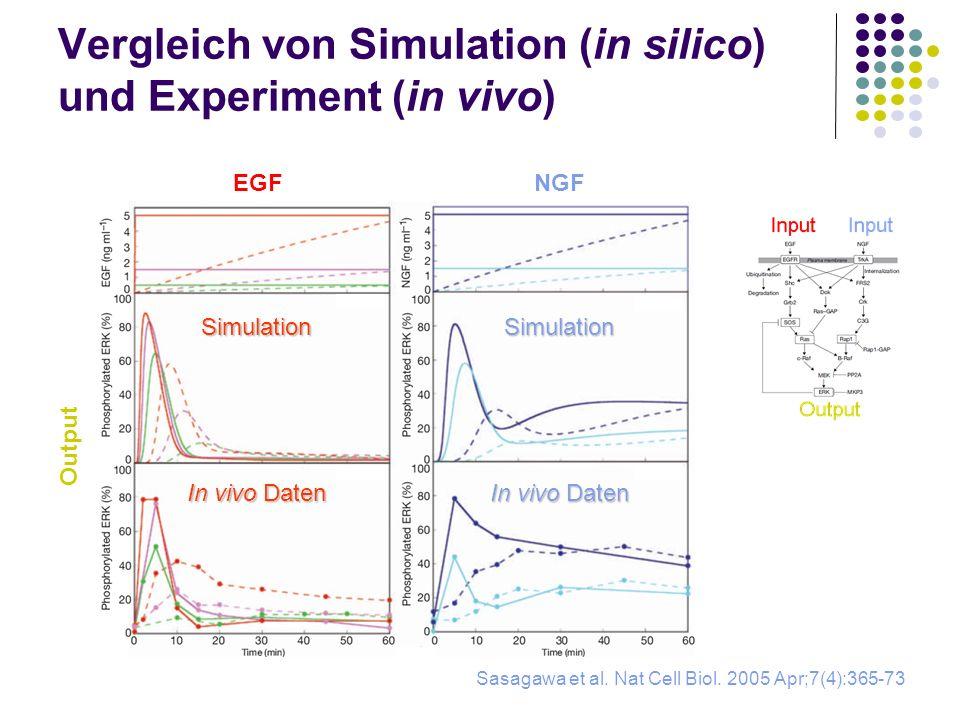 Vergleich von Simulation (in silico) und Experiment (in vivo) Sasagawa et al. Nat Cell Biol. 2005 Apr;7(4):365-73 Output EGFNGF SimulationSimulation I